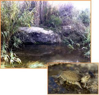 Projecte forestal Onada 2015